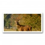 Plaque photo décorative ALU Grand cerf de profil