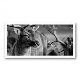Plaque photo décorative PVC Portrait de Cerfs