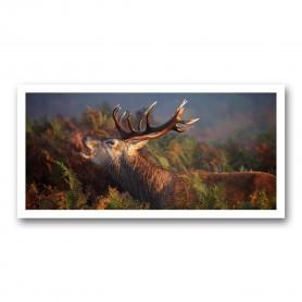 Plaque photo décorative PVC Cerf au brame