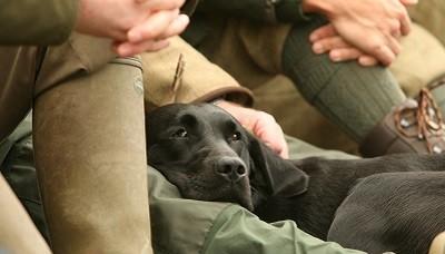 Santé et hygiène du chien