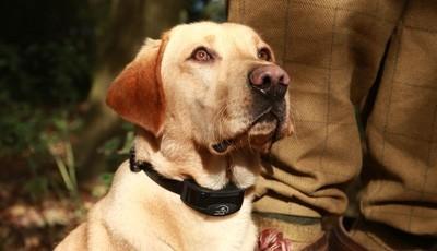 Dressage de chien de chasse